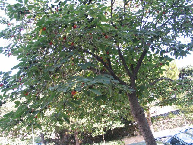 tn_arbre.jpg